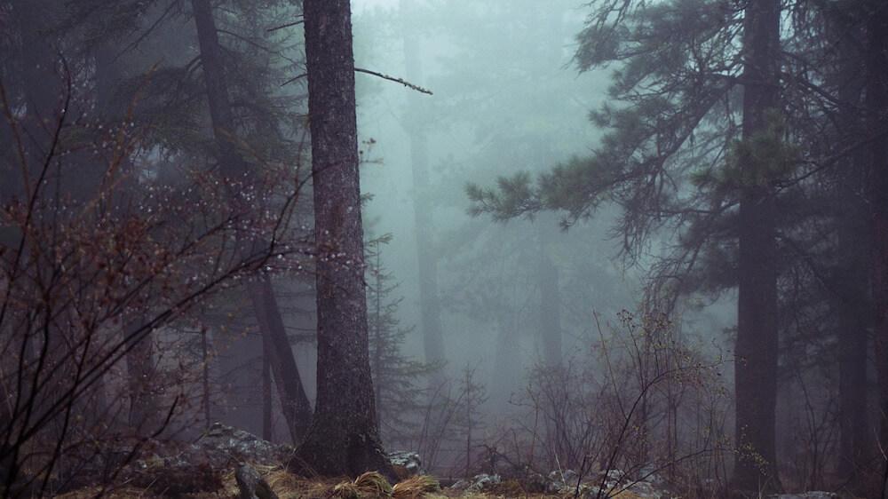 A Cozy Author Goes Dark: Ten Dark Mystery Favorites