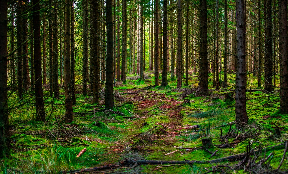 Don't Go Into the Woods Today: 10 Wilderness Thrillers & Why They