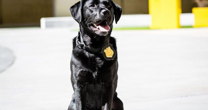 Dogs With a Badge: Writing stories about K9s